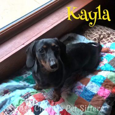 Choices Pet Sitters - Kayla
