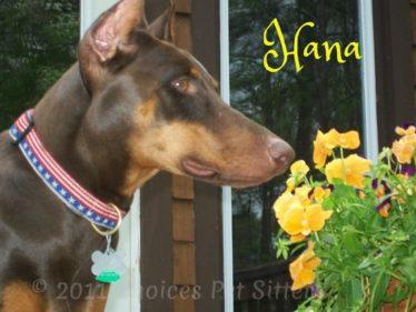 Choices Pet Sitters - Hana