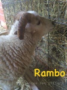 Mini-Farm Pet Care
