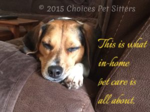 Overnight Pet Care - Choices Pet Sitters