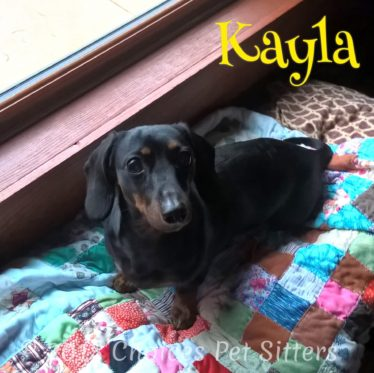 Choices Pet Sitters - Kayla
