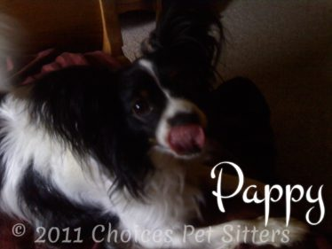 Choices Pet Sitters - Pappy